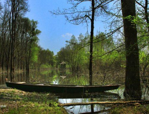 Predavanje o šumi Žutici